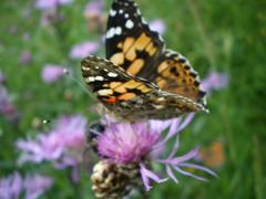 Schmetterlingsexkursion in den Garten.